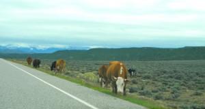 Mexican Rural Road Hazards